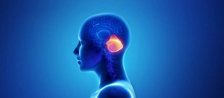 Spinal-Cerebellar-Ataxia